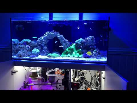 Show Off and Discuss Your Red Sea Reefer Series | Page 41